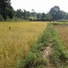 Cultivated land in Katni area credit M Bohner